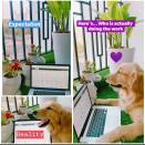 Working from home is more fun when your pet does it! <em>Photo credit: Debasmita Tewary</em>