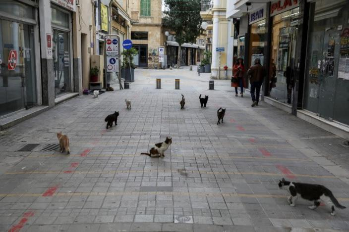 Feral Cats Take Over Cyprus