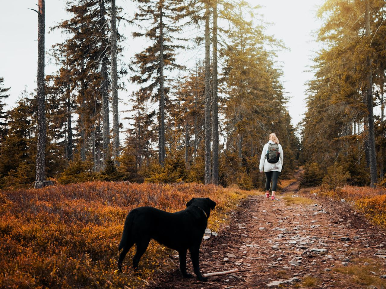 """<p>Our furry friends need daily exercise, and walking your <a href=""""https://www.prima.co.uk/search/?q=dog"""" target=""""_blank"""">dog</a> is a great way of getting outside, bonding with your pet, and exploring the great outdoors too.  </p><p>Autumn is a beautiful time to enjoy some scenic dog-walking, and there's plenty of amazing dog trails right on our doorstep.</p><p>Shannon Keary, Campaigns Manager at <a href=""""https://www.caninecottages.co.uk/"""" target=""""_blank"""">Canine Cottages</a>, says: """"Getting out with your dog for daily walks is one of the most important things you can do for your pet.  </p><p>""""Our list of the best dog walks in the UK will hopefully help inspire you to take a trip with your dog and explore the very best this country has to offer.""""</p><h2 class=""""body-h2"""">See five top dog walks in the UK for autumn below:</h2>"""