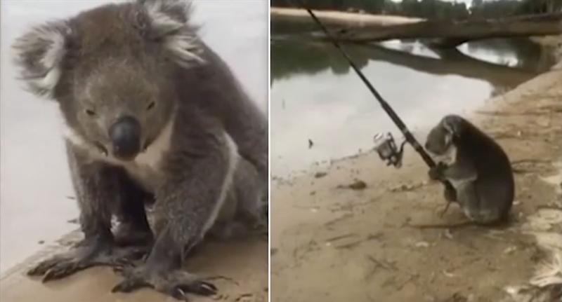 Just Another Day In Australia Family Spot Fishing Koala On Camping Trip