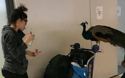 Earlier this year an emotional support peacock was denied flight from Newark Liberty International Airport - Credit: Reuters
