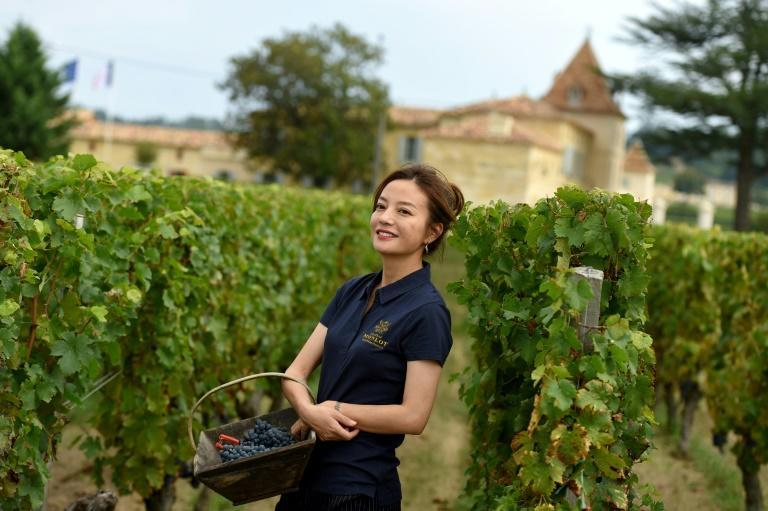 References to popular film star Zhao Wei (pictured at her French vineyard) have been censored from major Chinese video streaming sites (AFP/Nicolas TUCAT)