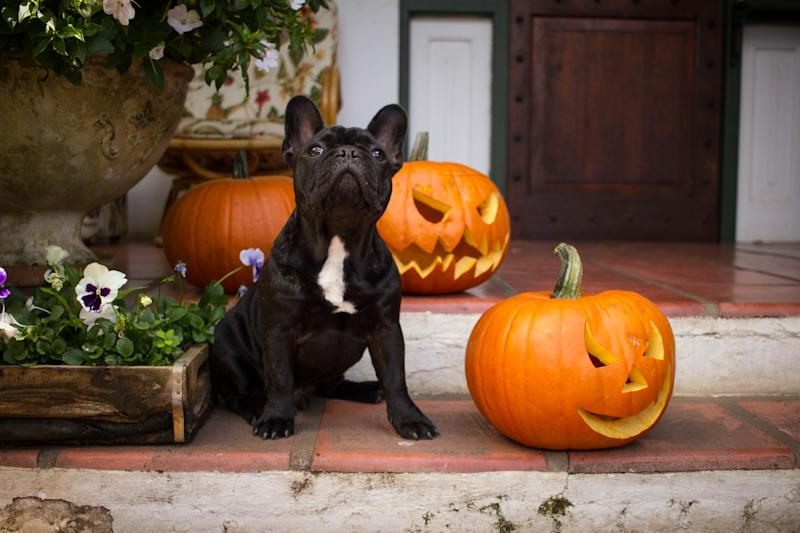 It's all treats and no tricks this Halloween for the pet in your life. (Photo: Getty Images)