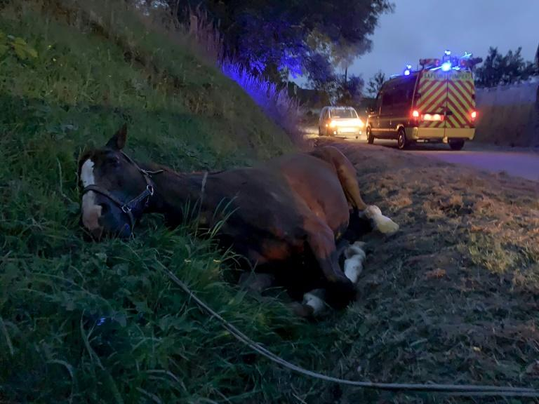 Grisly series of horse mutilations mystifies France