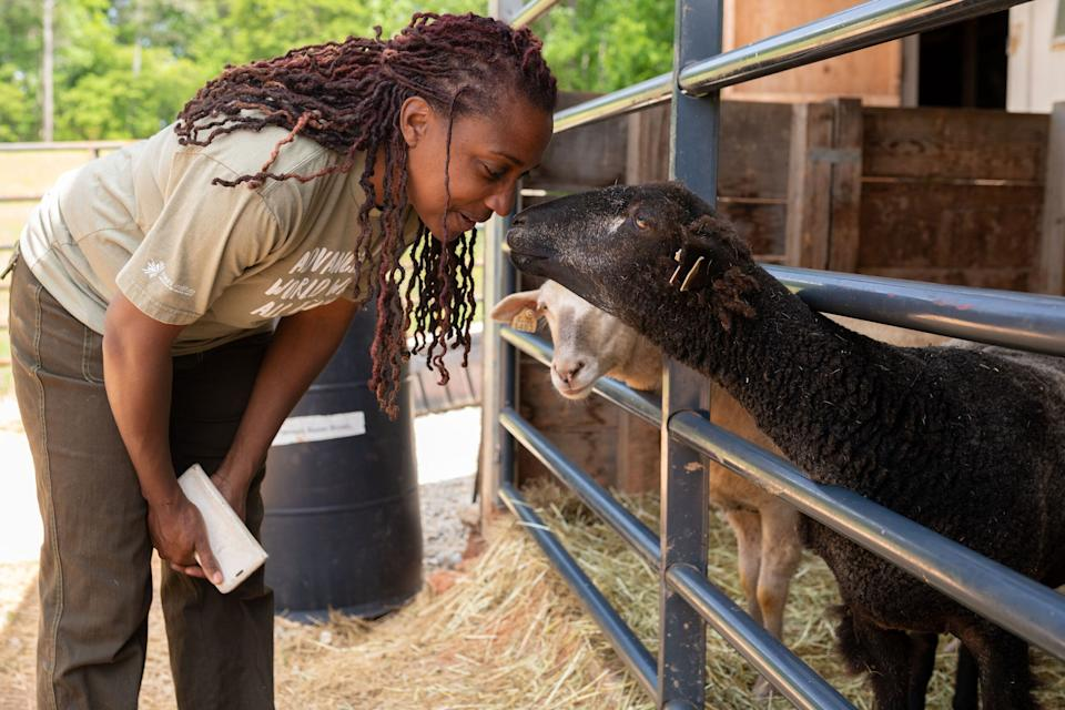 Keisha Cameron checks on her sheep at her farm in Grayson, Georgia. (Photo: Lynsey Weatherspoon for HuffPost)