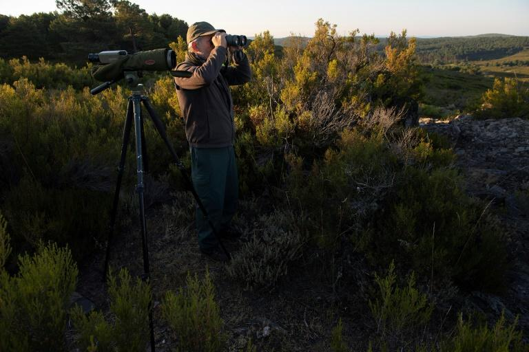 Forest ranger Carlos Zamora scans the horizon for wolves (AFP/PIERRE-PHILIPPE MARCOU)