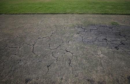 A dried out wicket is seen at a cricket pitch in Cape Town, South Africa, February 11, 2018. Without water, the wickets are considered dangerous to players. All club and school cricket matches has been cancelled as the city attempts to avert a major water crisis. REUTERS/Mike Hutchings