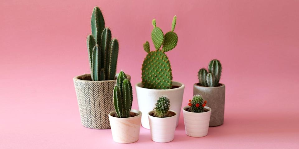 <p>Learning how to reuse items in your home will save you a ton of cash down the line. It's also better for the environment! Check out our list of top 100 items to never throw away — and instead, use them for something different!<br> </p>