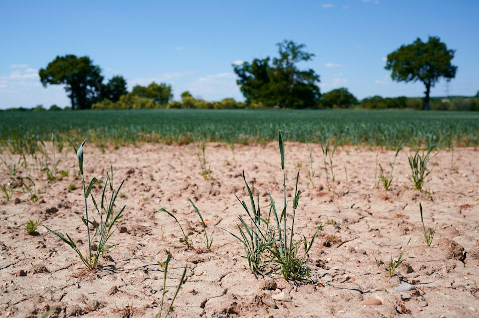Planting trees could help Europe adapt to droughts, study says (Getty Images/iStockphoto)