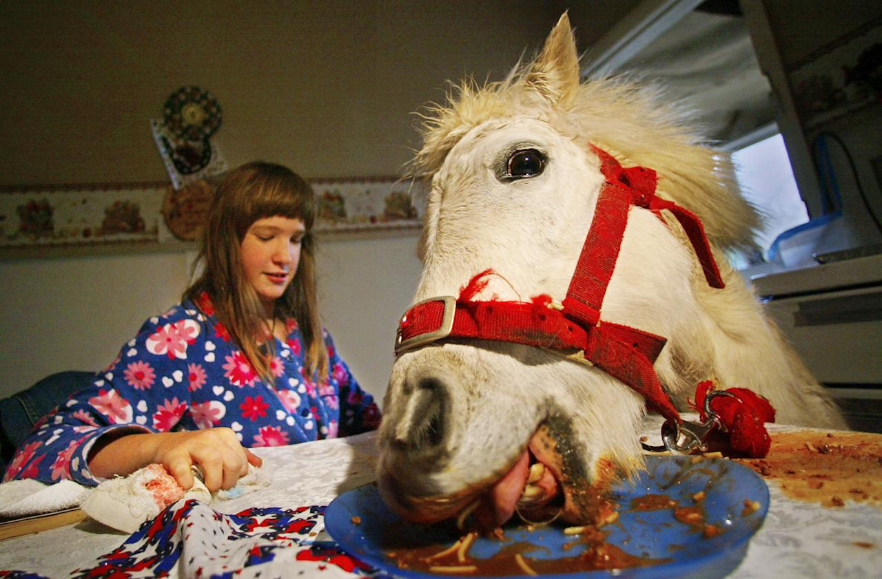 10-year-old Carissa Boulden watches her pet horse Princess eat spaghetti bolognaise at the family's dining table at their home in Sydney August 18, 2004. Princess, a Shetland pony, is given free run of the suburban Sydney house, eats with her owners at mealtimes and drinks beer every Sunday, but also provides therapy for Carissa who suffers cerebral palsy. REUTERS/Tim Wimborne  TBW/FA