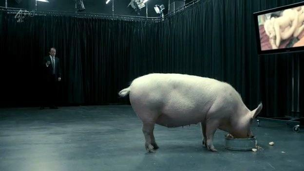 A pig eating out of a trough in a large room with a man standing in the background