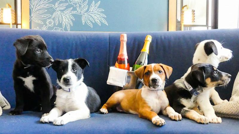 You can have puppies and prosecco delivered to your door at this hotel