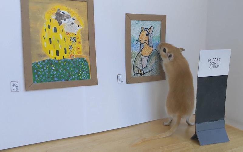 A gerbil looks at a painting in a miniature art gallery