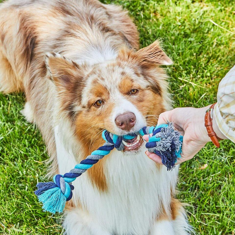 dog tugging on braided rope toy