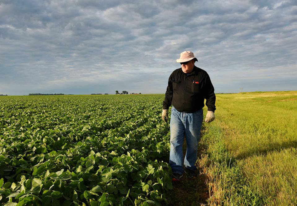 Corn and soybean farmer William Hejl checks one of his soybean fields in Amenia, North Dakota, U.S., July 6, 2018.  REUTERS/Dan Koeck