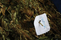 """A sheet of paper that reads """"Critical"""" classifies a variety of marijuana as it is cleaned and weighed outside a home in the mountains surrounding Badiraguato, Sinaloa state, Mexico, Tuesday, April 6, 2021. As the government moves to legalize marijuana, farmers in Sinaloa's mountains are focusing on higher-quality strains that still fetch a higher price or continue to grow marijuana and opium poppy, hoping at least one of the crops will keep them afloat while some have stopped growing it all together. (AP Photo/Eduardo Verdugo)"""