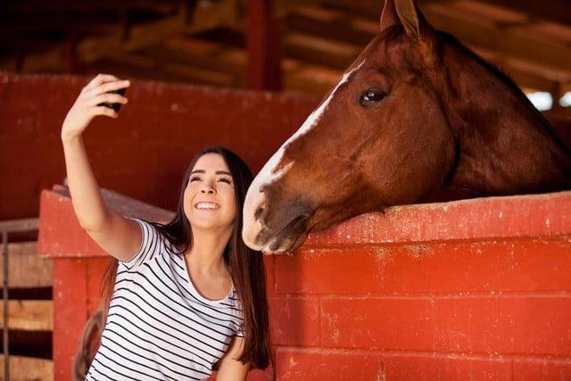 google appsperiments photo apps horse selfie