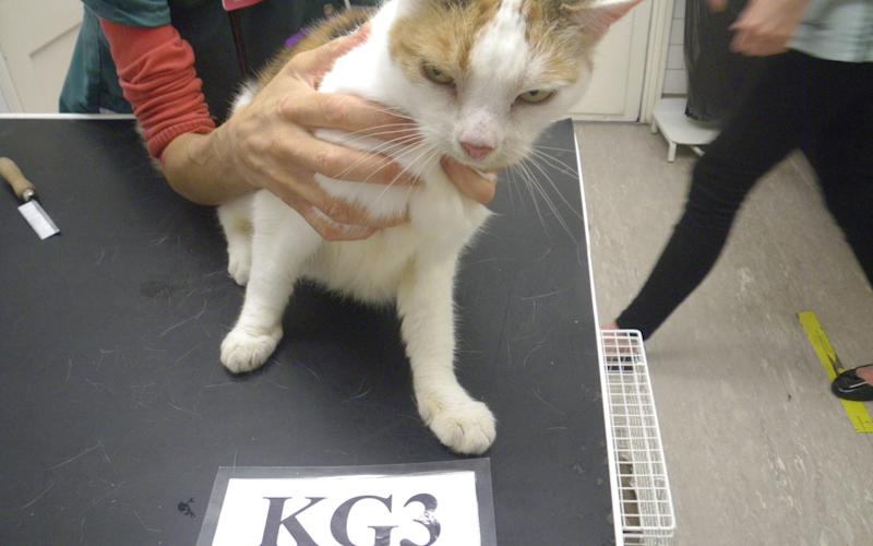 Cat which was left for two weeks in Chessington, Surrey while it's owners were away - Credit: SWNS