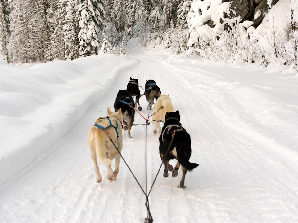 "There's no shortage of mushing activities throughout New England during winter, but none warms our hearts like <a href=""https://www.edendogsledding.com/"" rel=""nofollow noopener"" target=""_blank"" data-ylk=""slk:Eden Ethical Dogsledding"" class=""link rapid-noclick-resp"">Eden Ethical Dogsledding</a> in Eden Mills in northern Vermont, run by international sprint sled dog champion Jim Blair, where the welfare of the dogs is top priority. Meet and cuddle the ""Un-chained Gang""—a group of more than 35 free-range, highly pampered sledding dogs—before they whisk you along an extensive trail network paved exclusively for sledding. Eden Mills is a scenic drive and a reasonable distance from all of northern Vermont's principal winter destinations: Stowe, Jay Peak, Smuggler's Notch, and Burlington. If you're in New Hampshire, consider a 90-minute or three-hour sled ride with <a href=""https://dogslednh.com/"" rel=""nofollow noopener"" target=""_blank"" data-ylk=""slk:Muddy Paw Sled Dog Kennel"" class=""link rapid-noclick-resp"">Muddy Paw Sled Dog Kennel</a> near White Mountain National Forest in Jefferson, New Hampshire. Many of the 80 sweet pups at Muddy Paw are second chance or rescue sled dogs."