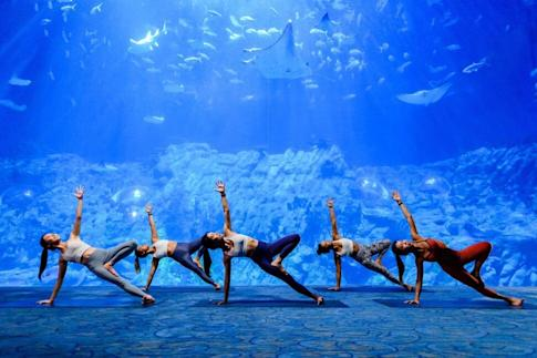 Yoga is one of the experiences being introduced at Ocean Park next month as part of its Green Staycation project. Photo: Handout
