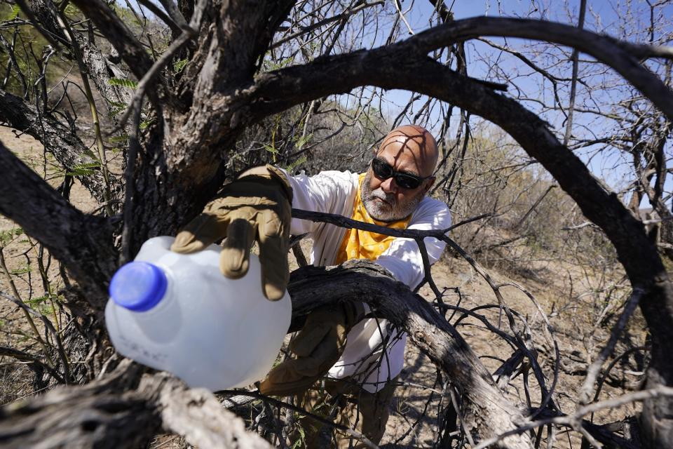 Peter Lucero, part of the Tucson Samaritans volunteer group, places a jug of water along known high traffic areas for migrants in the desert near Three Points, Ariz., on Tuesday, May 18, 2021. Spirituality remains at the heart of borderlands activism, with faith-based groups like the Tucson Samaritans that leave water and food in the Sonoran Desert. (AP Photo/Ross D. Franklin)