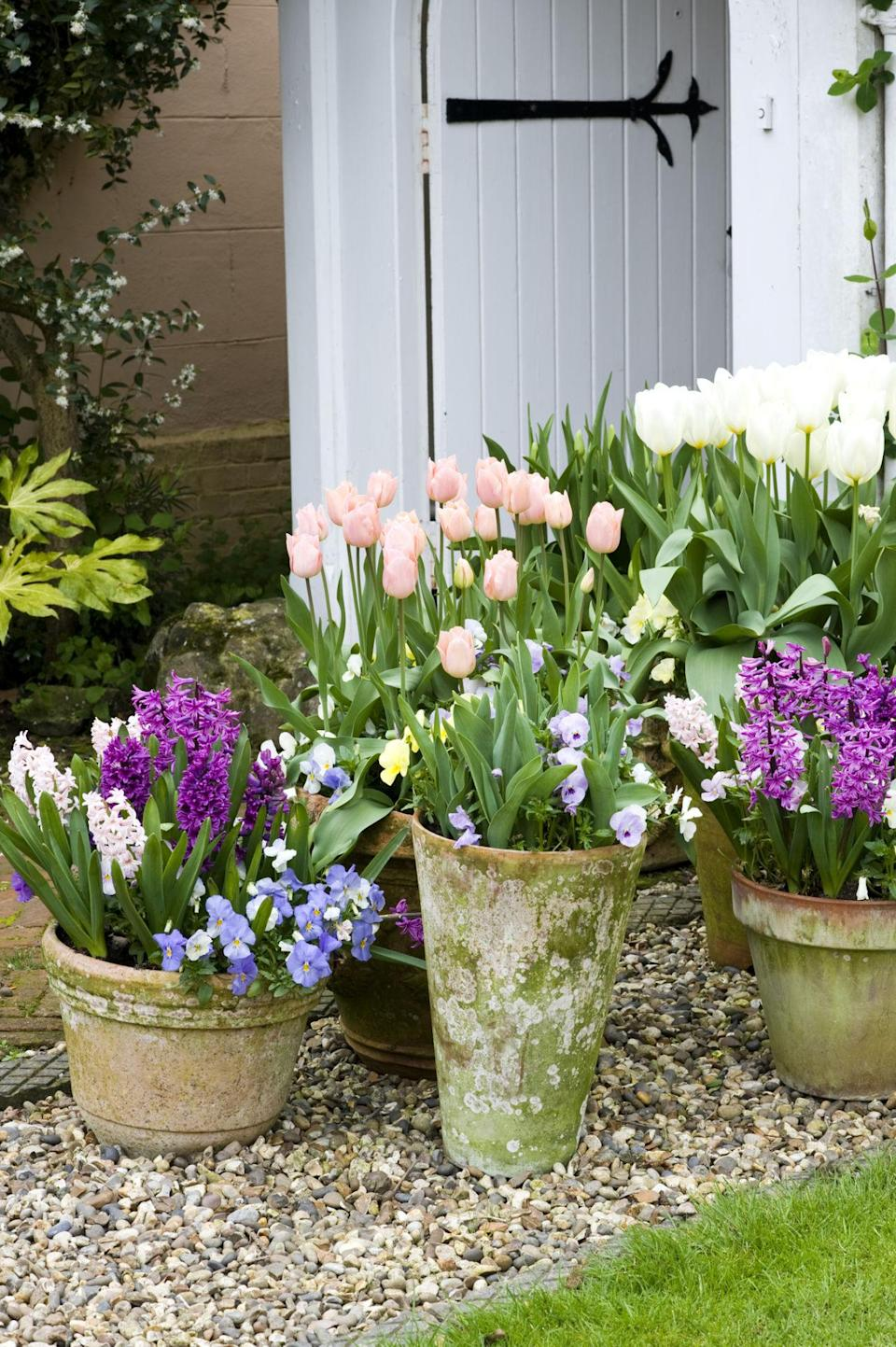 "<p>Make sure you pick a bulb for your garden's exposure (sun or shade), then dig a hole that's the proper depth, settling the bulb in place pointy-side up, since a bulb planted upside-down will not send up shoots. </p><p>""If you're unsure with some of the rounder, flatter bulbs, turn them on their side to plant, which still allows them to come up,"" advises Tankersley. Most importantly, leave the foliage in place until it withers; otherwise, the bulb can't make food for next year's bloom. Here are a few to try in your garden...<br></p>"