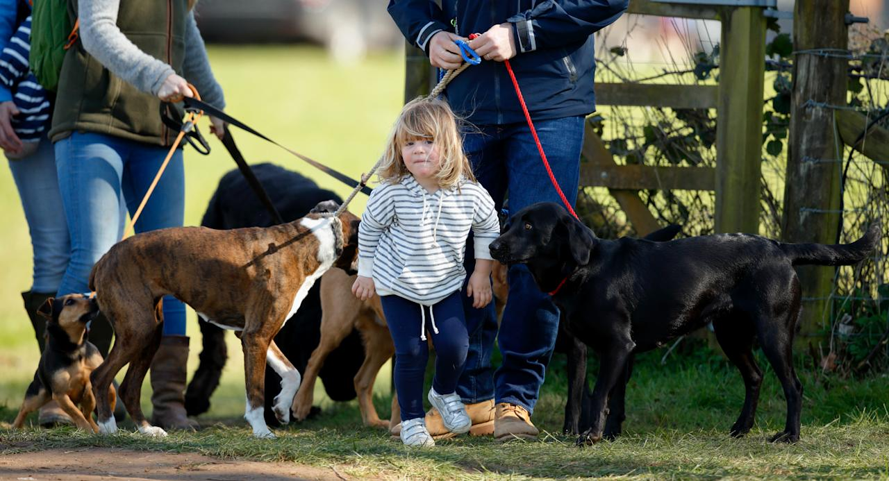 <p>Like this pack of pups that Mia hung out with while mom competed at the Gatcombe Horse Trials.</p>