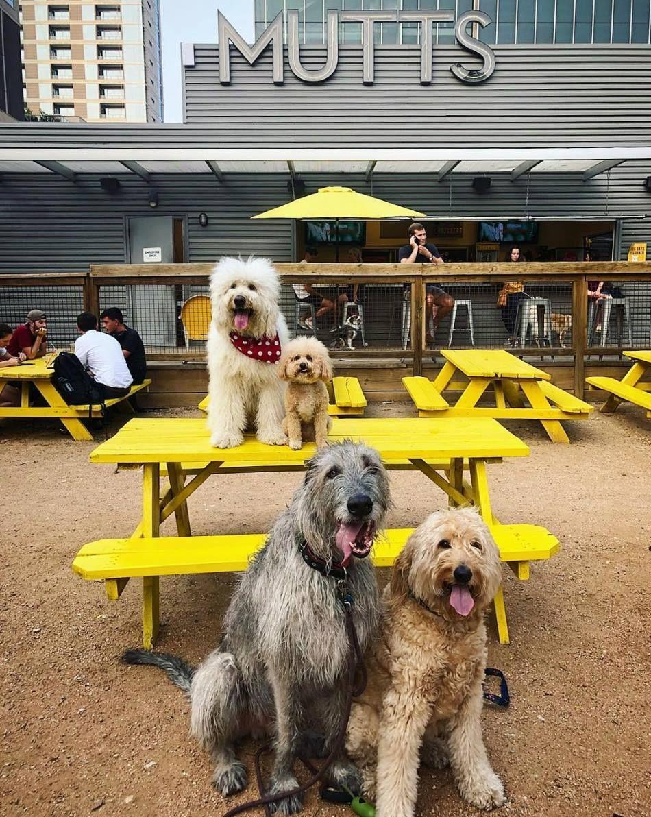 """<p><em>Fort Worth and Dallas, TX</em></p><p>Imagine a bar where you can fetch a drink <em>and </em>dogs run free. Well, that fantasy is a reality at <a href=""""https://muttscantina.com"""" rel=""""nofollow noopener"""" target=""""_blank"""" data-ylk=""""slk:Mutts Canine Cantina"""" class=""""link rapid-noclick-resp"""">Mutts Canine Cantina</a>. The Texas-based bar has two locations–one in Dallas, and the other in Fort Worth. </p><p>Photo: Facebook/<a href=""""https://www.facebook.com/MuttsCanineCantina/photos/a.332765716853725/1474265006037118/?type=3&theater"""" rel=""""nofollow noopener"""" target=""""_blank"""" data-ylk=""""slk:MuttsCanineCantina"""" class=""""link rapid-noclick-resp"""">MuttsCanineCantina</a> </p>"""
