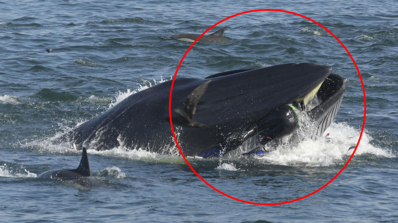 Video shows diver narrowly escaping the jaws of a whale
