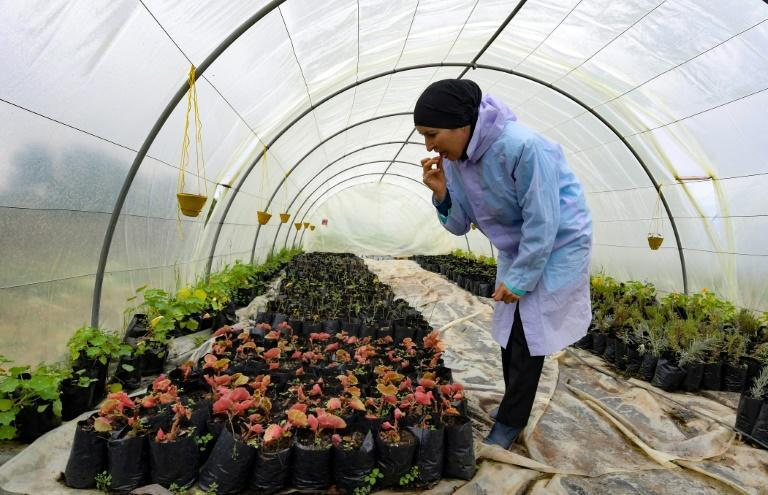Sonia Ibidhi, a 42-year-old journalist who turned to organic farming, tastes some petals in the greenhouse of her small farm where she produces edible flowers, in the northwestern Tunisian coastal town of Tabarka