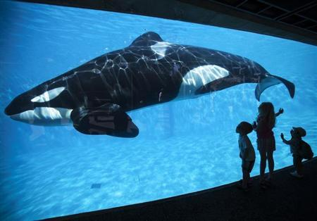 Young children get a close-up view of an Orca killer whale during a visit to the animal theme park SeaWorld in San Diego, California