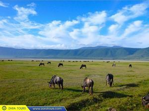 Tanzania is open with smaller crowds, limited tour sizes and lower occupancy rates. Find solace in the safety practices Zara Tours and the local tourism industry have put in place to encourage travel.