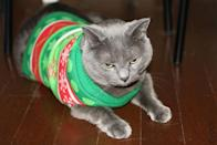 """<div class=""""caption-credit""""> Photo by: Rock Your Ugly Christmas Sweater</div>""""I will have my revenge."""" - Ruffles"""