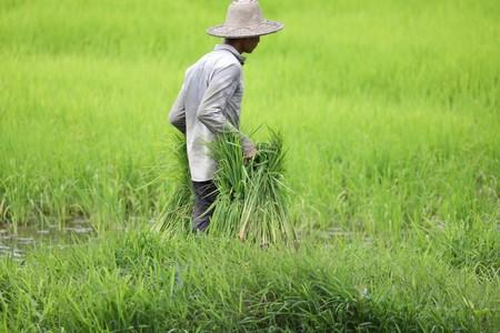 Farmers work on their land at the proposed New Yangon City project site in Yangon