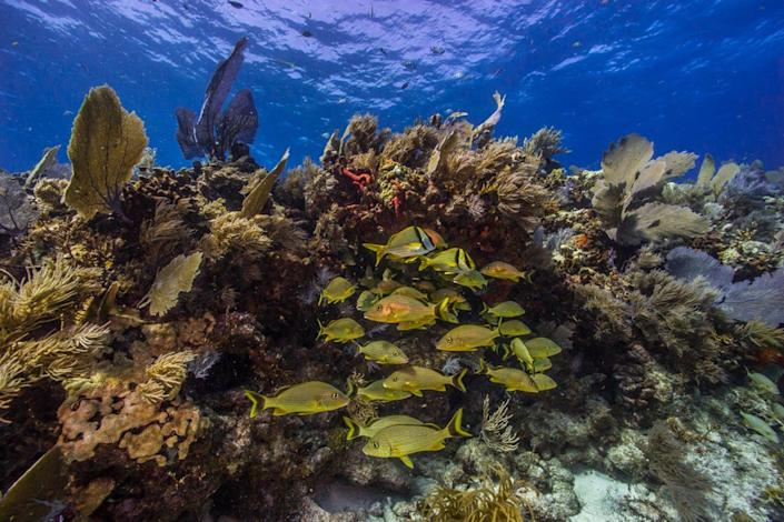 Fish swim through the sea plants growing on a coral reef.
