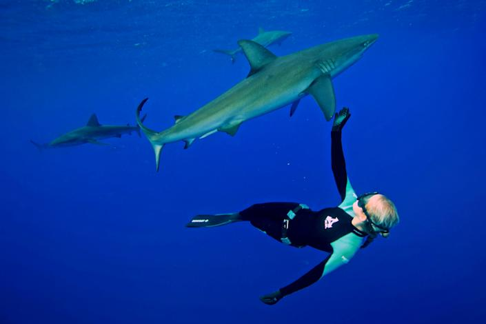 Meet the woman dispelling the myths about one of the worlds most feared ocean predators by swimming without protection with great white shark. Petite beauty Ocean Ramsey travels the globe swimming with many species of sharks hoping to prove they are nothing like their Jaws film reputation. In these incredible photographs friend Juan Oliphant caught on camera the moment a massive 17-foot Great White let Ocean tail ride through the deep. Shark conservationist Ocean, who is also a scuba instructor, model and freediver, swam with the massive fish in waters off Baja Mexico last year. PIC BY JUAN OLIPHANT / CATERS NEWS