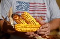 FILE PHOTO: Farmer Dan Roberts holds cobs of corn during the harvest in Minooka