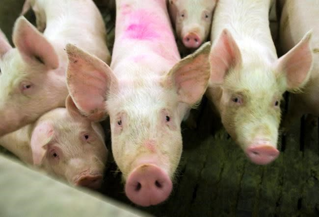 China suspends imports from Canadian pork company over food safety issues