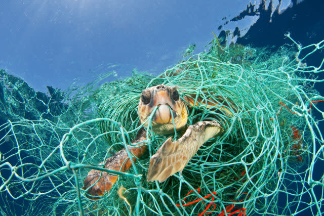 Loggerhead turtles are harmed and killed by plastic waste, such as abandoned fishing nets (naturepl.com/Jordi Chias /WWF/PA)