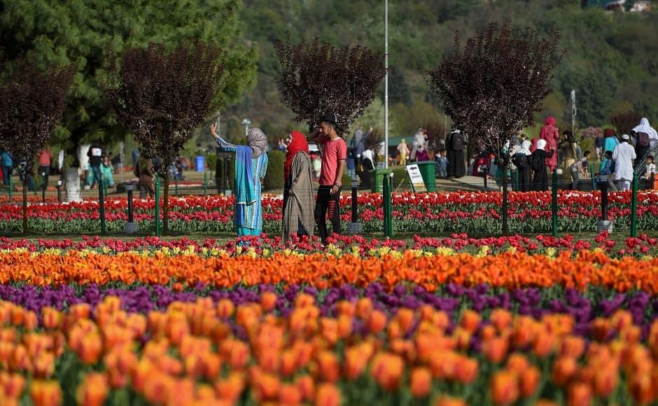 Asia's biggest tulip garden in Srinagar sees high tourist footfall; tulip festival to conclude on 5 May