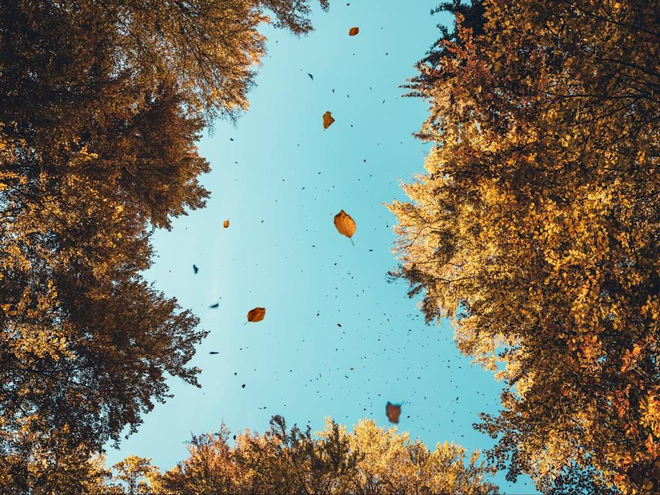 <p>Growth spurt:  increased tree-planting will form a central pillar in the UK's efforts to reach net zero carbon emissions by 2050</p> (Getty)