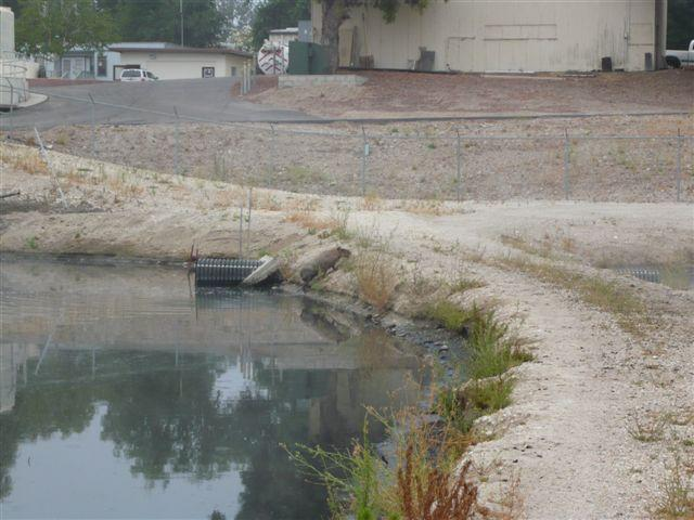 A Capybara has eluded capture on the Central Coast, after it was spotted  and photographed at the Paso Robles Wastewater Treatment Plant. (KION46/Fox35)
