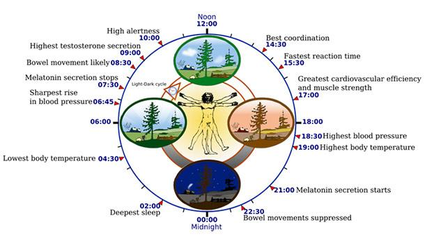 The Beginner's Guide to Getting Better Sleep circadian rhythm