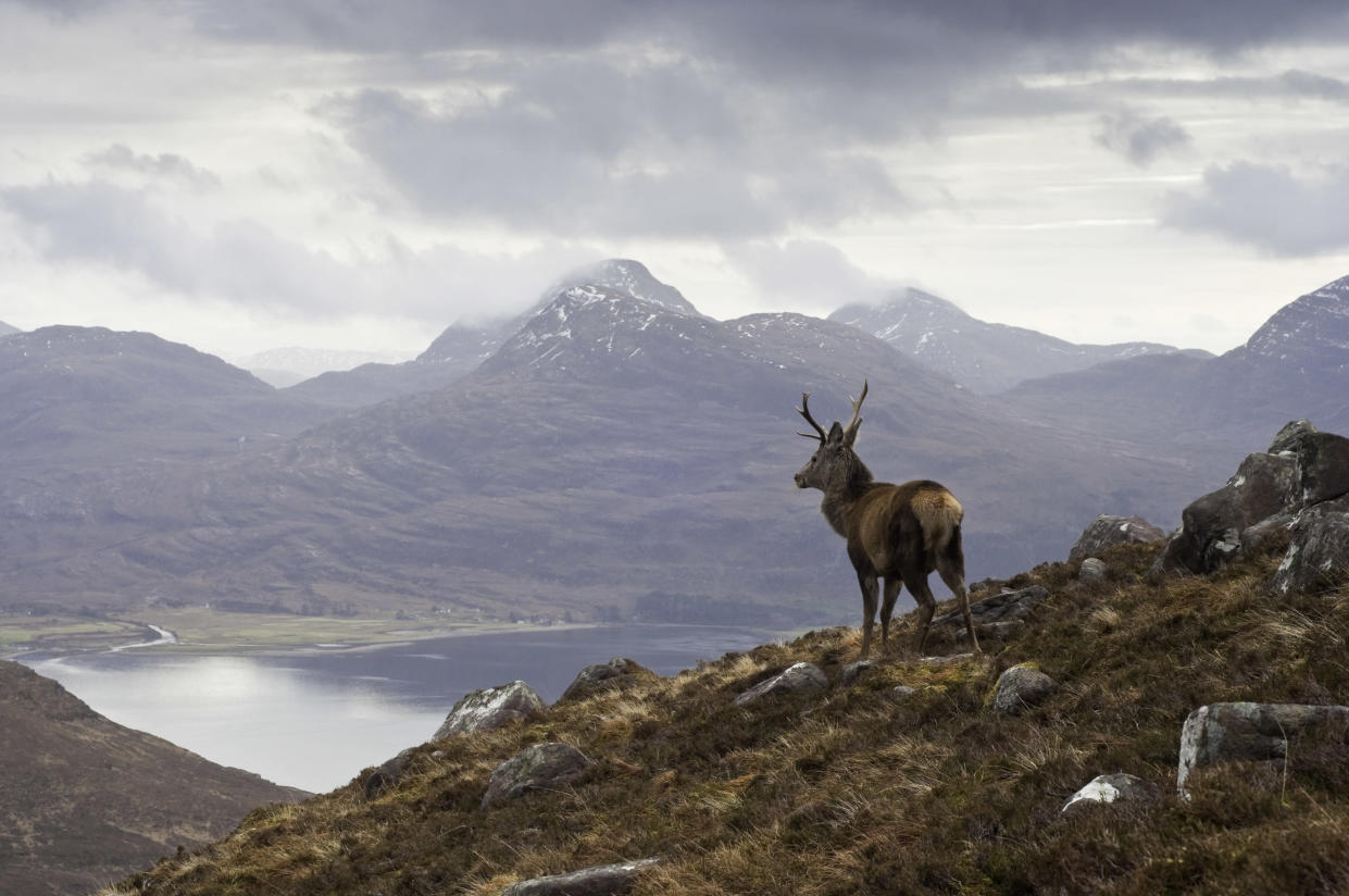Wild stag overlooking a loch. It's remote alright. (Getty Creative)