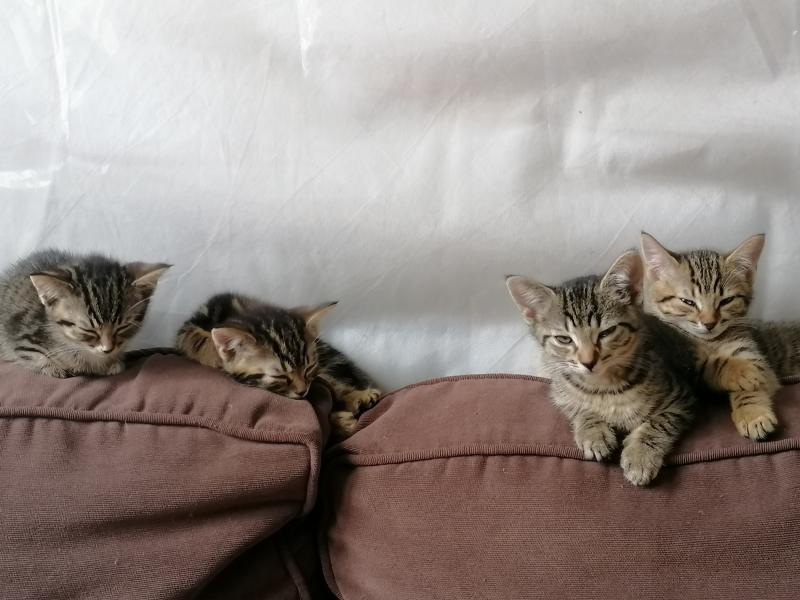 Kittens have been found dumped in carrier bags or outside supermarkets