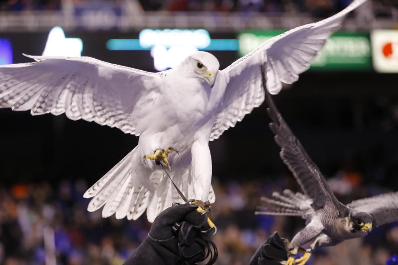 Prognosis unclear for Air Force falcon mascot hurt in West Point prank