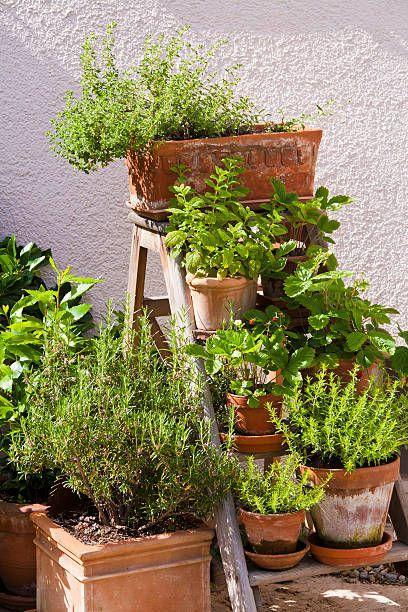 "<p>Make your patio pots do double-duty by adding beauty and giving you <a href=""https://www.countryliving.com/gardening/garden-ideas/g29804807/best-healing-plants/"" rel=""nofollow noopener"" target=""_blank"" data-ylk=""slk:fresh herbs"" class=""link rapid-noclick-resp"">fresh herbs</a> for dinner! For full sun, you can't beat basil; look for different types including Italian, Genovese, purple and Thai. Rosemary is another sun lover. If you have mostly shade, consider cilantro, parsley and thyme, which like sun but do okay in shade. </p><p><a class=""link rapid-noclick-resp"" href=""https://www.amazon.com/Burpee-Culinary-Herb-Starter-Seed/dp/B07QC7ZFMK/ref=sr_1_24?dchild=1&keywords=herbs&qid=1611349284&s=lawn-garden&sr=1-24&tag=syn-yahoo-20&ascsubtag=%5Bartid%7C10050.g.30420939%5Bsrc%7Cyahoo-us"" rel=""nofollow noopener"" target=""_blank"" data-ylk=""slk:SHOP HERBS"">SHOP HERBS</a></p>"