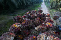 Workers load palm oil fruit weighing up to 50 pounds (22 kilograms) each into a truck on a palm oil plantation in Sumatra, Indonesia, Nov. 13, 2017. Many Western countries relied on their own crops like soybean and corn for cooking, until major retailers discovered the cheap oil from Southeast Asia had almost magical qualities. (AP Photo/Binsar Bakkara)