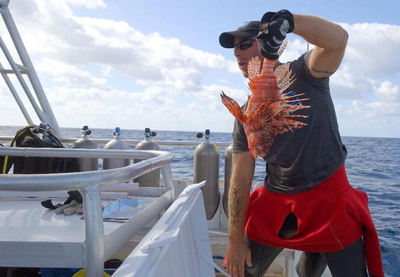 Diver Eric Billips holds up a lionfish caught during the Winter Lionfish Derby in the waters off Islamorada, Florida (AFP Photo/Kerry Sheridan)