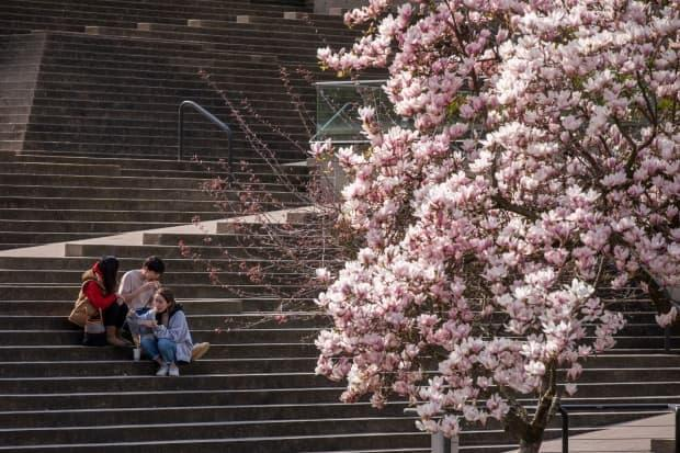 People are pictured wearing face masks in downtown Vancouver, British Columbia on Tuesday, April 6, 2021. See cherry tree with blossoms in fg.